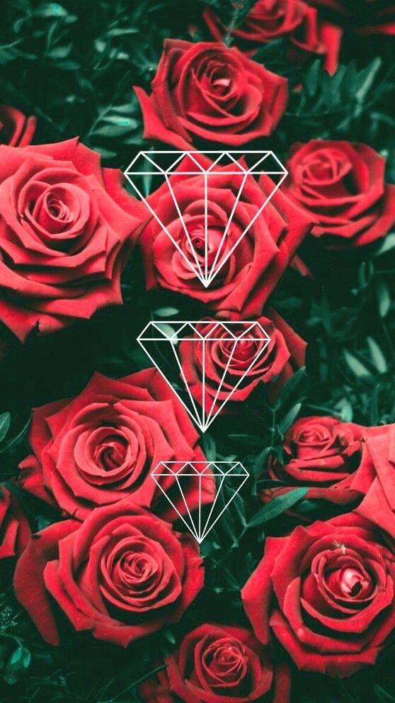 Papel De Parede Rosas Em 2020 Papel De Parede Rosa Rosas