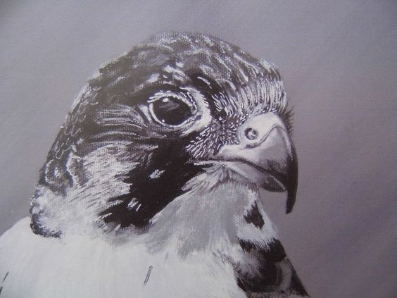 Peregrine Falcon - Limited Edition Mounted A3 Artist print of beatiful bird of prey by HeathersPortraits on Etsy