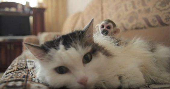 Neues Glück: Katze adoptiert süßes Affenbaby! #News #Unterhaltung