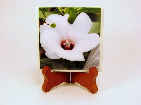 Handmade Photo Coaster Hibiscus Flower 0080C by PhotographyByRoger on Etsy