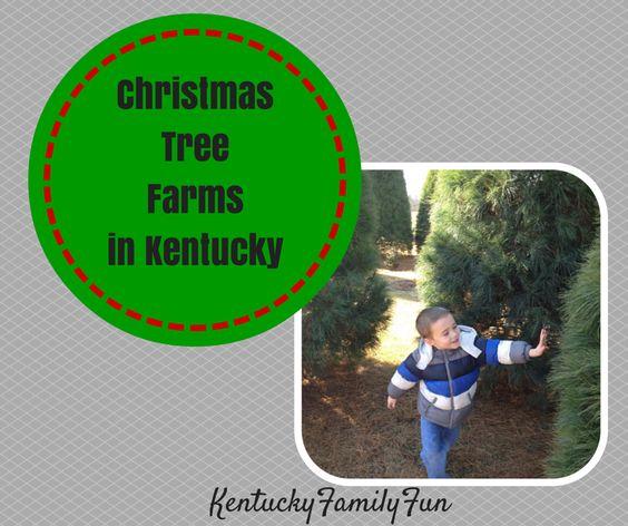 Kentucky Family Fun Christmas Tree Farms In Kentucky Christmas Tree Farm Tree Farms Christmas Tree