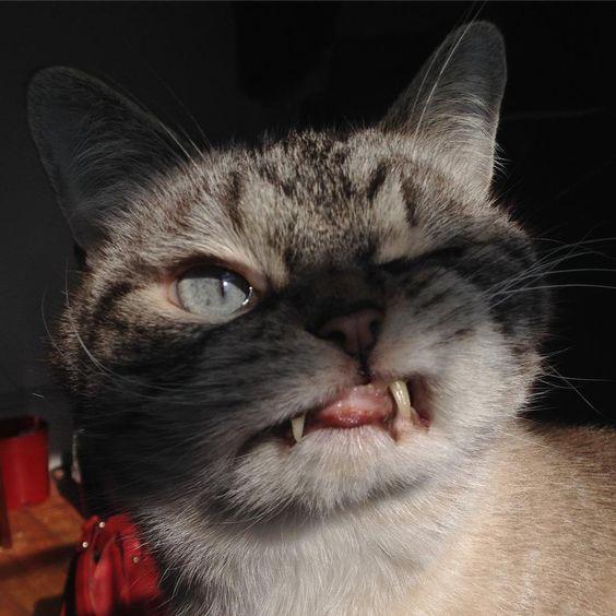 "17.7k Likes, 72 Comments - Loki (@loki_kitteh) on Instagram: ""Throwback to a creepy time 😼 #tbt #cats #catsofinstagram #cat #furbaby #adoptdontshop #loki…"""