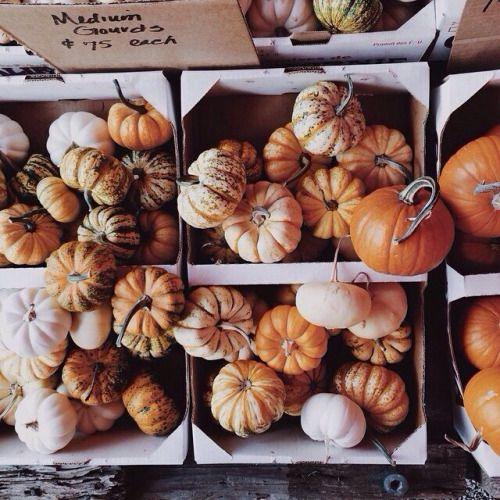 Resultado de imagen de autumn tumblr calabaza