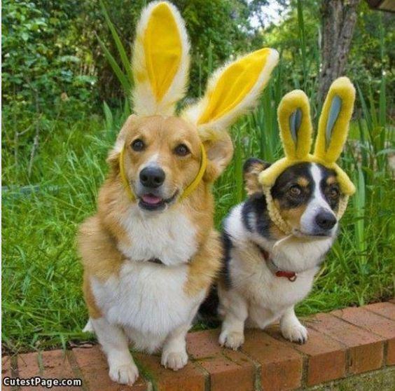 Roscoe, look confident....they won't know we are dogs!  From www.cutestpage.com