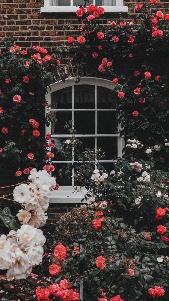 45 Kaunis Roses Taustakuva Taustat Iphonelle In 2020 Beautiful Flowers Wallpapers Flower Phone Wallpaper Aesthetic Iphone Wallpaper