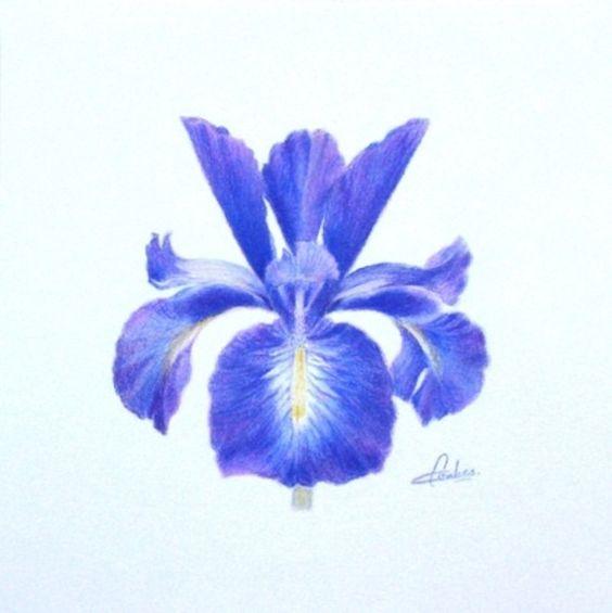Maison Interieur Bois Moderne : explorez couleur iris pour couleur et plus encore comment les iris