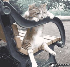 funny cat gifs - Google Search