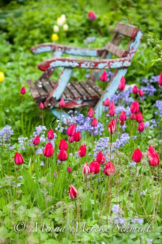 Spring, rustic blue and brown bench surrounded by cheerful lavenders and tulips. thank you God for such a lovely scenery.