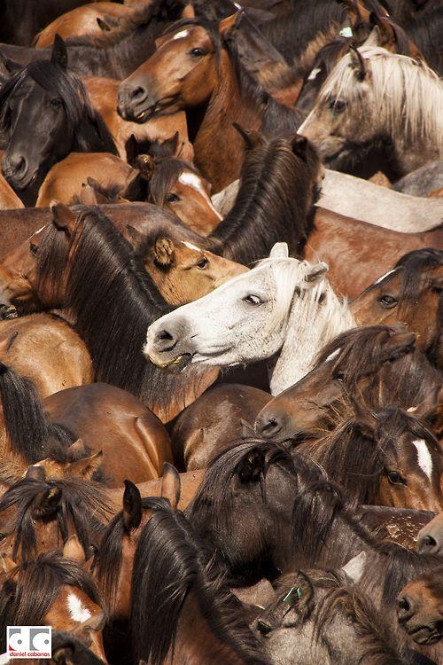 troupe de chevaux,band of horses by DanielCabanas