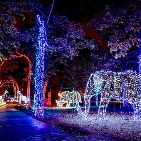 Here Are The Best Towns To See Stunning Christmas Lights Across The U S In 2020 Holiday Lights Display Christmas Light Displays Christmas Light Show
