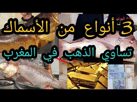 Maroc أجي تعرف الحوت لن تصدق أغلى 3 أسماك في المغرب ها حقيقة ديال الثروة السمكية Youtube Company Logo Tech Company Logos Logos