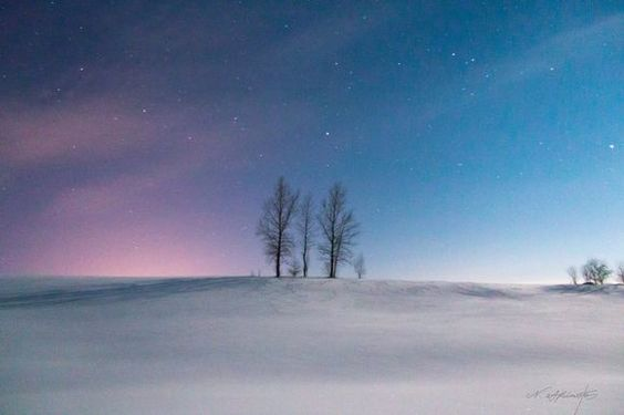 A visionary starlit sky, a family's tree 月明かりに照らされる。家族。   深夜。月明かりに照らされ、見守られる 美瑛町 家族の木   気に入っていただけたら沢山シェアしてくださいね。(^^)v