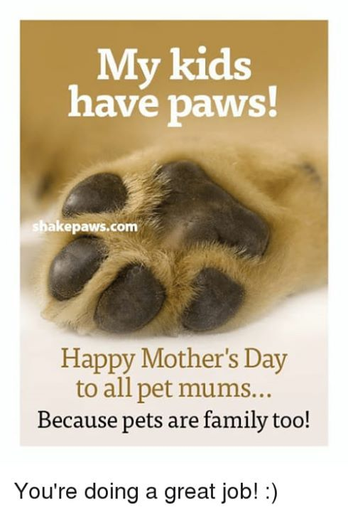 Happy Mother S Day To All Mum S And Pet Mum S Out There Have A Wonderful Day Happy Mothers Pet Mom Happy Mother S Day