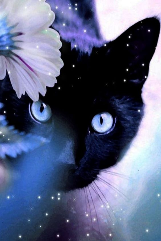 Awesome >> Black Cat With Blue Eyes Dream #repin