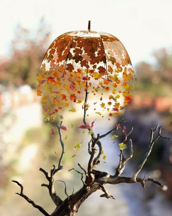 33 Des Idees De Decoration Qui Ajouteront De La Beaute A La Beaute De Votre Jardin En 2020 Photographie De L Automne Photographie Miniature Photographie Creative