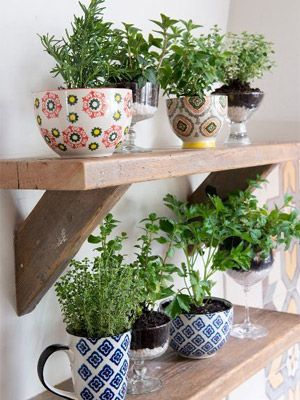mini jardim de temperos : Tenha uma mini horta de temperos na cozinha! Jardins ...