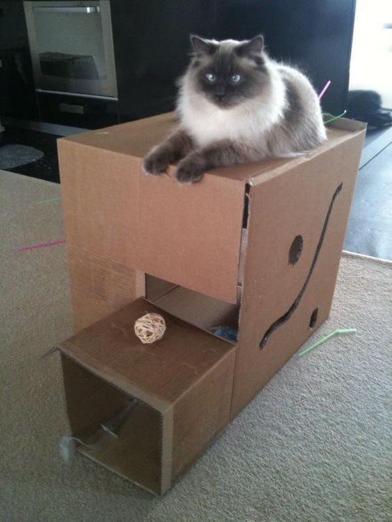 Cat toys cats and boxes on pinterest for How to make a cat toy out of a box