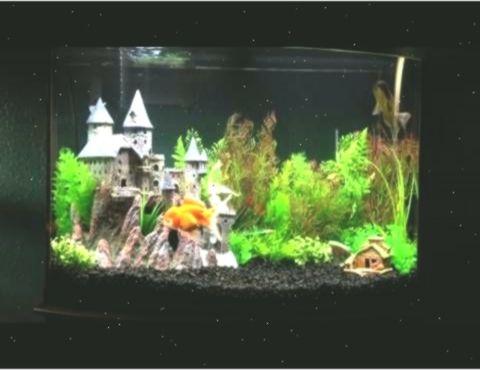 Harry Potter Fish Tanks Google Search