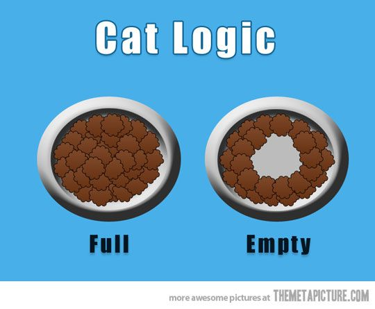 How cats see their food… My cat does this EVERY TIME! I thought he was the only one! lol