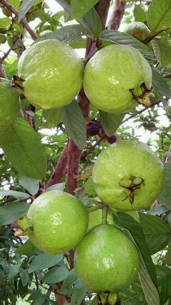 Pin On Frutas Y Verduras