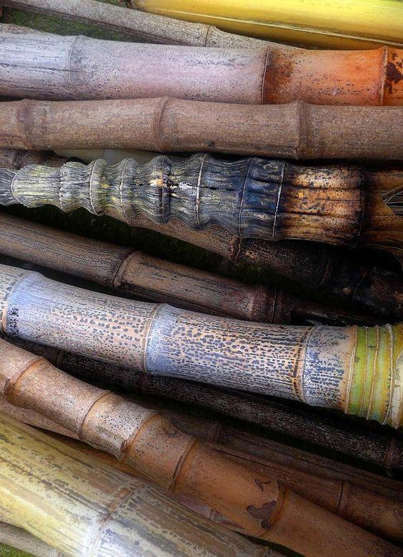 canawanderer: Bamboo | colours | Pinterest | Zigeuner und Bambus