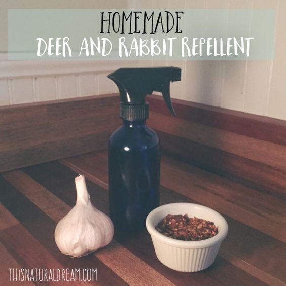 homemade rabbit and deer repellent