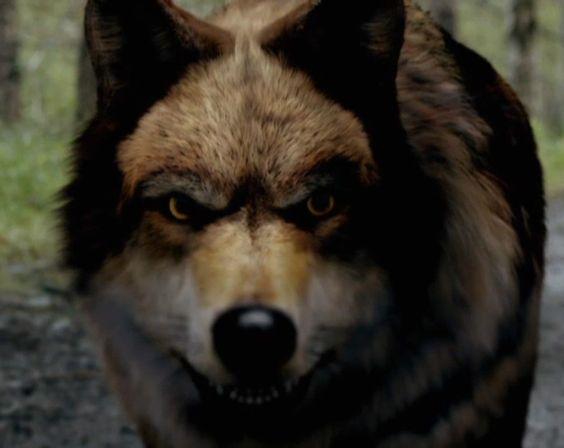 Wolfblood lobo marrom