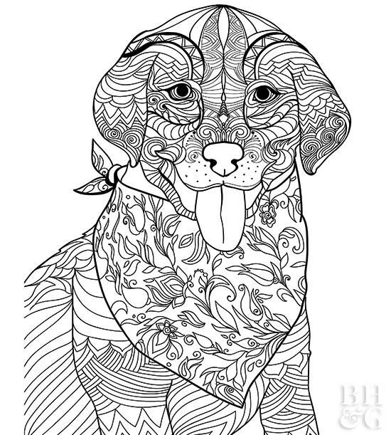 Here Are 24 Free Pet Coloring Pages To Help You Relax Dog Coloring Book Dog Coloring Page Puppy Coloring Pages