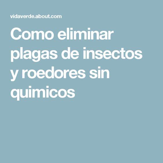 Como eliminar plagas de insectos y roedores sin quimicos