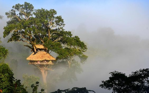 Take your love of unique holiday destinations to new heights! #tree #holidays #travelling #asia #hotel