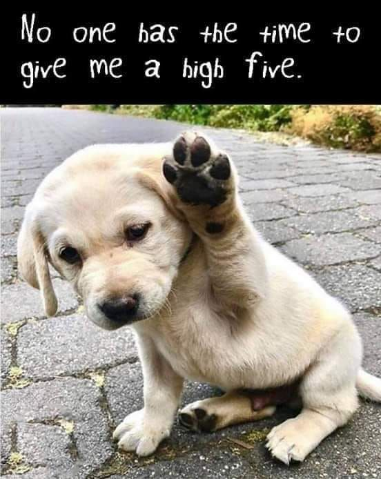 High Five Sweet Cute Funny Animals Cute Baby Animals Funny Animals