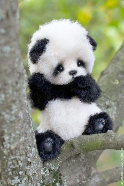 Baby Animals Look Cute Cute Baby Animals Bear Cute Baby Animals Cute Little Animals Baby Animals Pictures