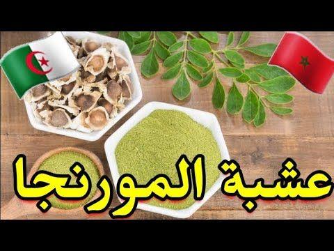 شجرة المورينجا باللهجة الجزائرية والدارجة المغربية والتونسية وفوائدها Youtube Sugar Cookie Desserts Food