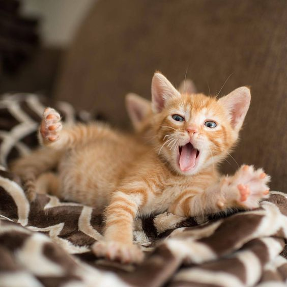 How Can Your Cat S Immune System Be Strengthened During The Winter
