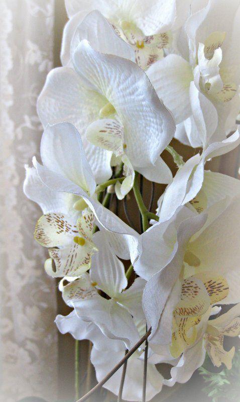pod 8 orchid - Scrapbook.com