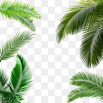 Palm Leaf Palm Leaf Clipart Leaf Clipart Png Transparent Clipart Image And Psd File For Free Download In 2020 Leaf Clipart Leaf Background Leaves