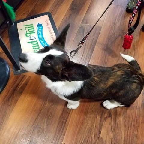 Cutecustomeralert Steve Rogers Stopped By Pet Valu Purcellville Va To Grab Some Head To Tail Treats Pet Valu Pets Steve Rogers Animals