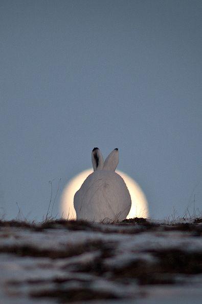 \ Moon hare by Ivan Kislov via 500px.