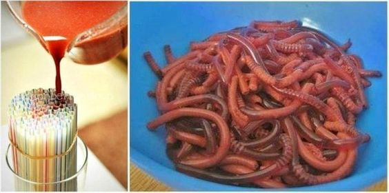 Squirmy Jelly Worms - For next Halloween :)