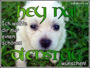 Dienstag Bilder - Jappy GB Pics - Wochentage - 005-hund-dienstag-www.gb-stylez.de.jpg: