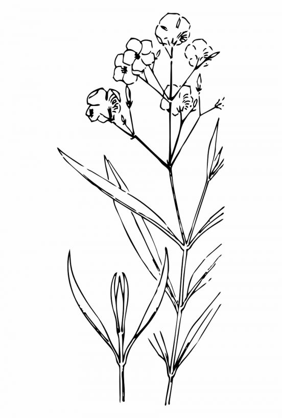17 Flower And Stem Drawing Png Flower Drawing Pink Flowers Background White Flower Png