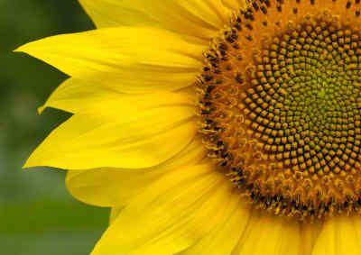 The Golden Ratio & Fibonacci