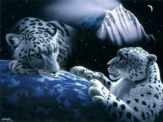 White tiger wallpapers for desktop to make our pc looks - White tiger wallpaper free download ...
