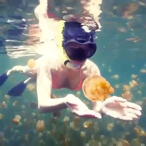Jellyfish Lake Palau Video by @misscindrich #exploringglobe . . . #epictravels #hotelusters #earthlusters #naturelusters #awesome_naturepix #instalove #followers #vsco #vscocam  #sky  #bestvacations #photooftheday #igers #bestoftheday #instagood #animals #beautifuldestinations #skypainters #webstagram #cloudporn #landscape #instavsco #picoftheday #wonderful_places #discoverallday #traveltoearth #jellyfish #sealife #adventuretime