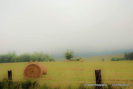 Hay Field Photo Misty Morning Photo Rural by LDTwedePhotography, $7.99