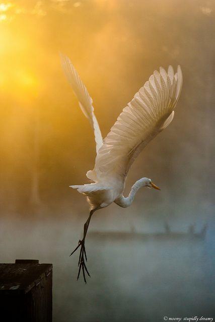 Voar, voar...até o infinito só pra te amar, amar!: