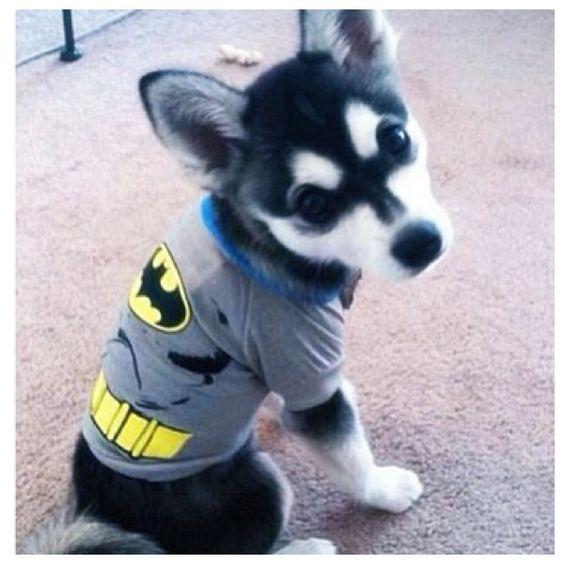 Aww super puppy