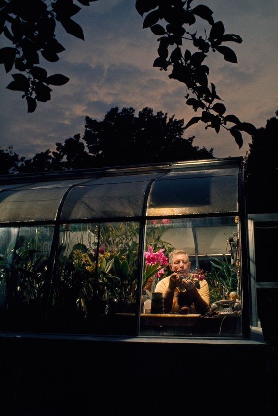 An amateur orchid grower works in the window of his greenhouse in Silver Spring, Maryland, April 1971