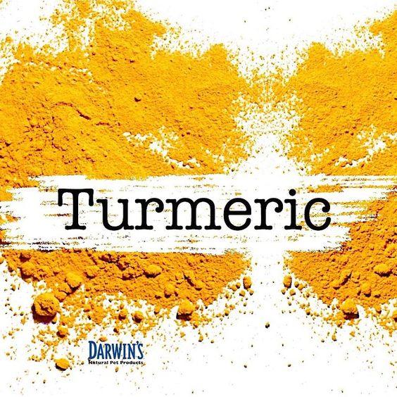 Watch Doctor Karen Becker discuss the benefits of #Turmeric for #pets.- A Powerful Anti-Inflammatory Agent  http://bit.ly/1rrL0ao