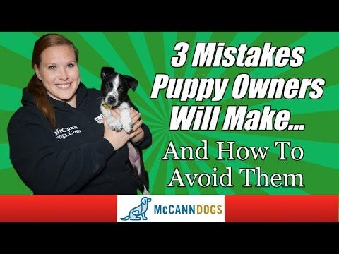 Tips For New Puppy Owners Professional Dog Training Tips